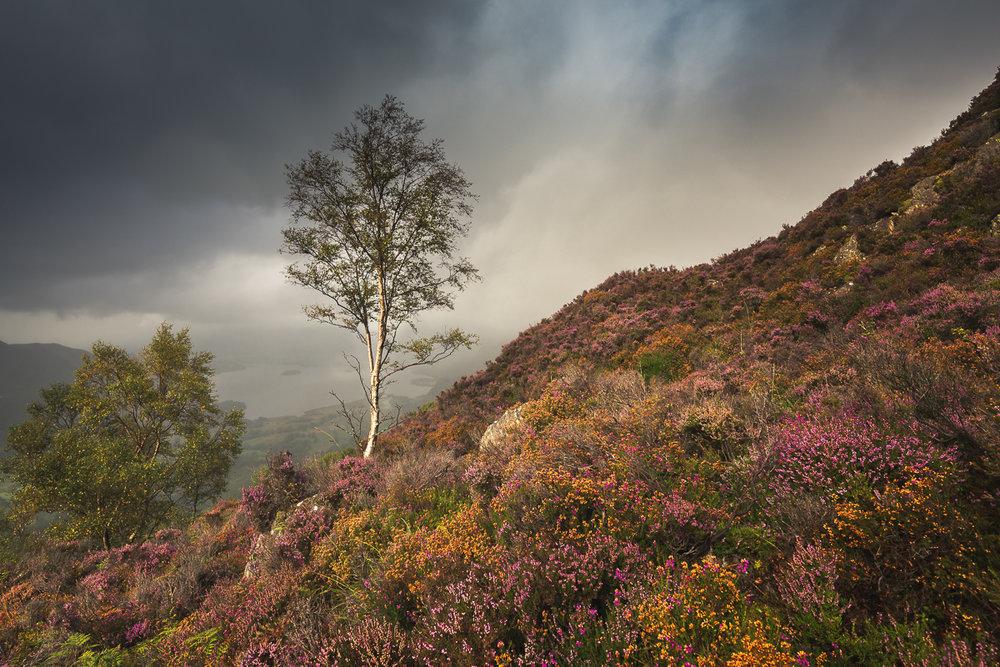 Woodland -