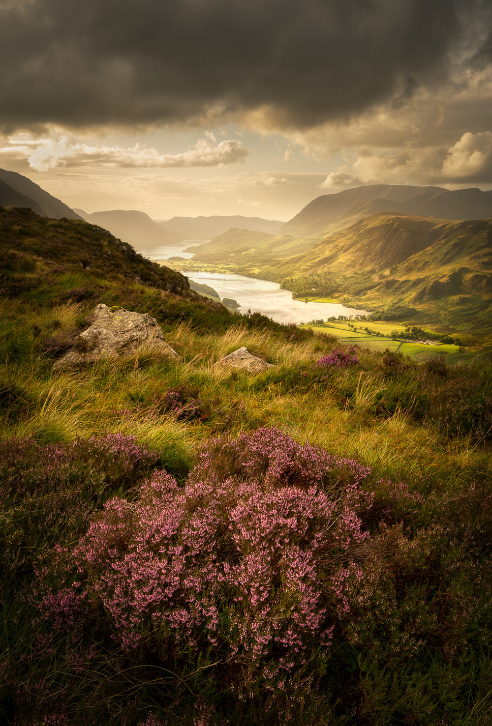 Buttermere Bloom  -   Buy this print