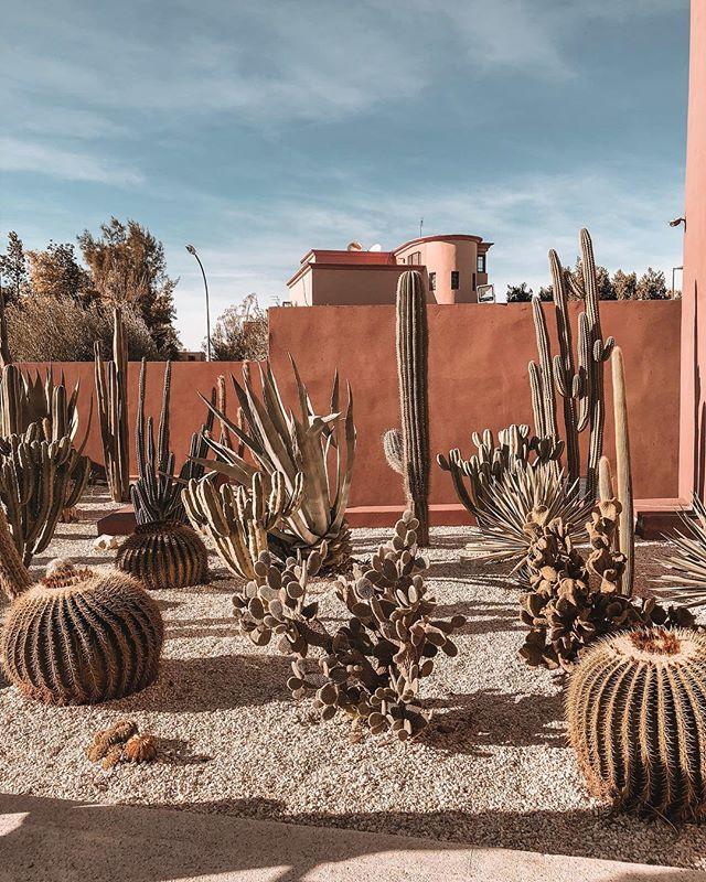 // Marrakech throwback 🌵 ⠀⠀⠀⠀⠀⠀⠀⠀⠀⠀⠀⠀ ⠀⠀⠀⠀⠀⠀⠀⠀⠀⠀⠀⠀ ⠀⠀⠀⠀⠀⠀⠀⠀⠀⠀⠀⠀ ⠀⠀⠀⠀⠀⠀⠀⠀⠀⠀⠀⠀ ⠀⠀⠀⠀⠀⠀⠀⠀⠀⠀⠀⠀ ⠀⠀⠀⠀⠀⠀⠀⠀⠀⠀⠀⠀ #morocco #sun #travel #instatravel #travelgram #vacation #traveling #love #sky #ig_morocco #moroccan #cactus #loves_morocco #travelmorocco #inmorocco #simplymorocco  #travelblogger #fez #moroccan #dutchblogger #belgianblogger #moroccanblogger #casablanca #travelmorocco #rabat #marrakech