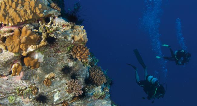 Un 77% de los peces de Rapa Nui son endémicos