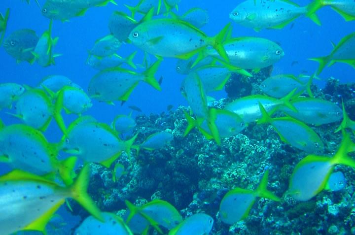 Juan Fernández es la isla con mayor densidad de especies endémicas en el mundo