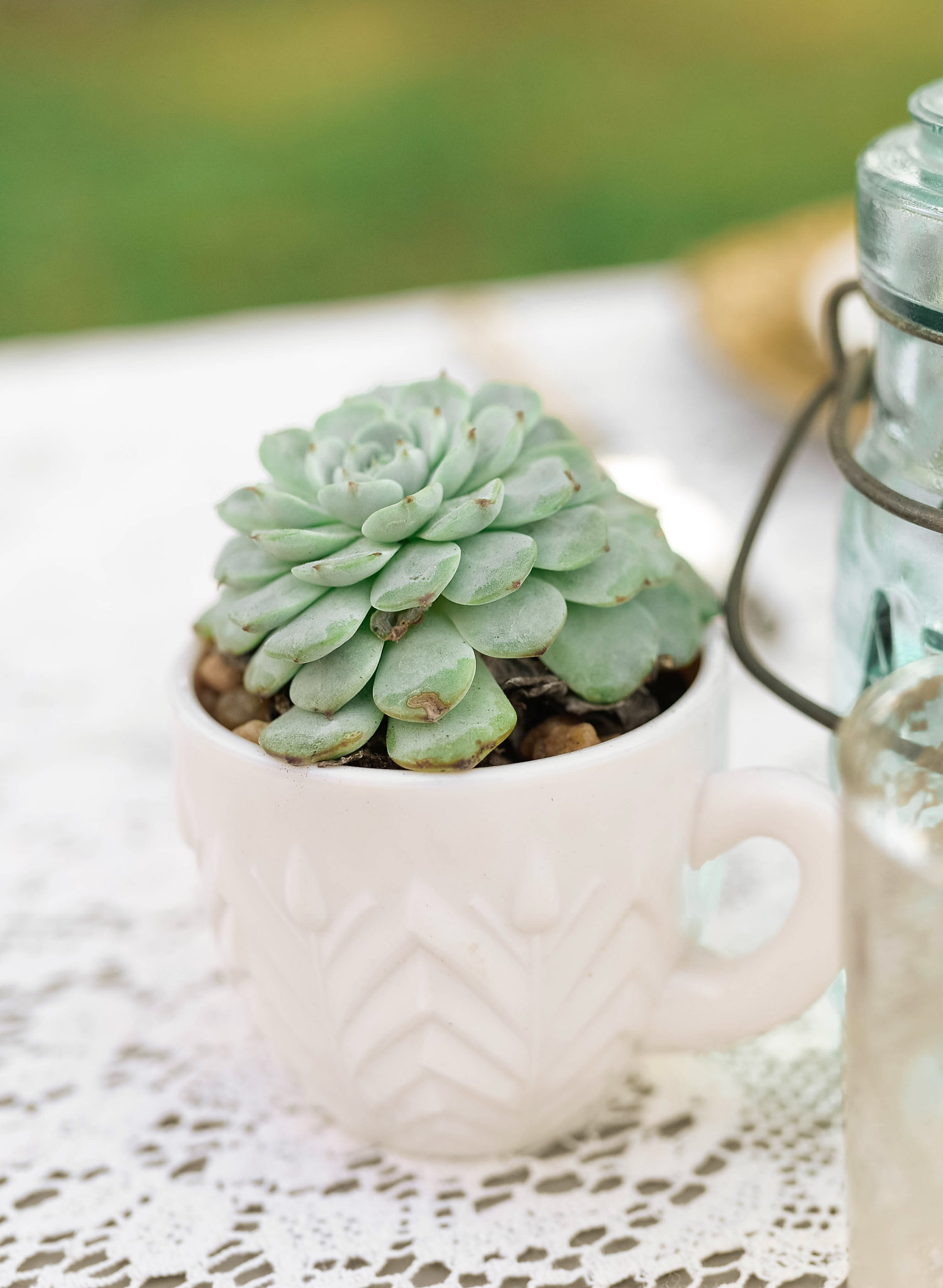 Succulents in Blush Cups