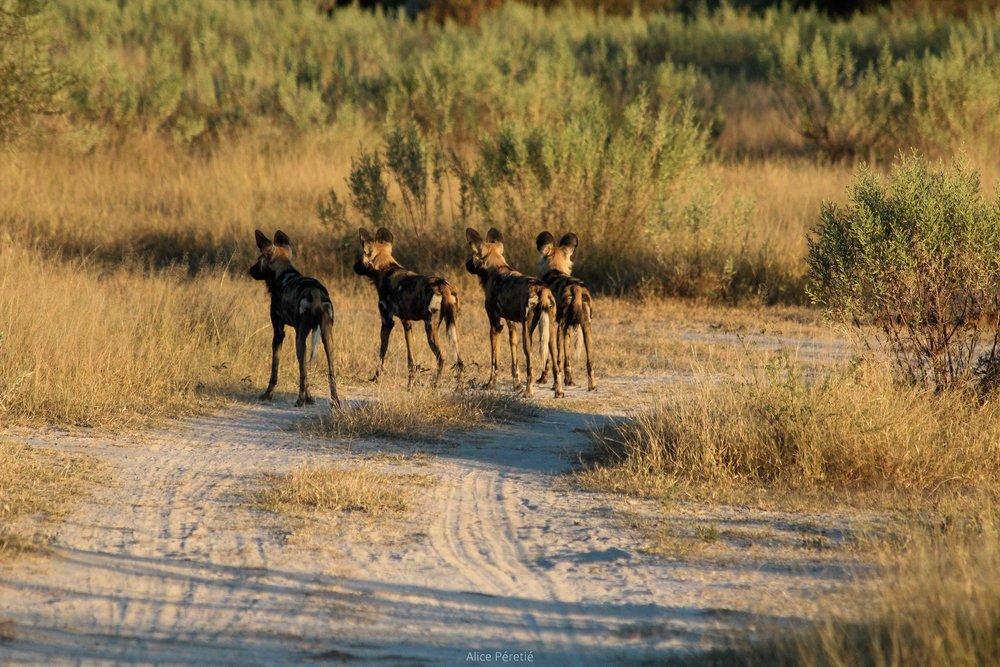 Botswana 2012 (193).jpg