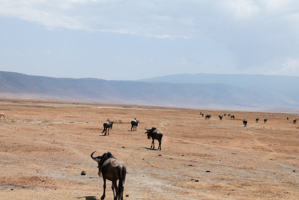 Northern Tanzanian Parks