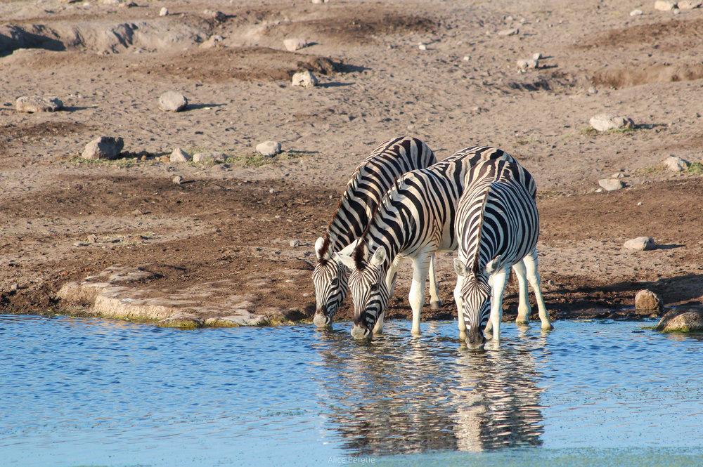 20120412-Namibie 2012 (322)APERETIE.jpg