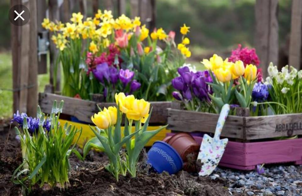 flower sale.jpg