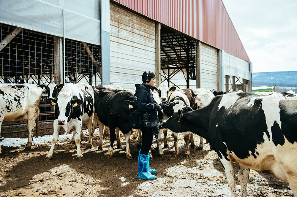Alan Yu gathers tape on a farm. Photo by Dani Fresh.