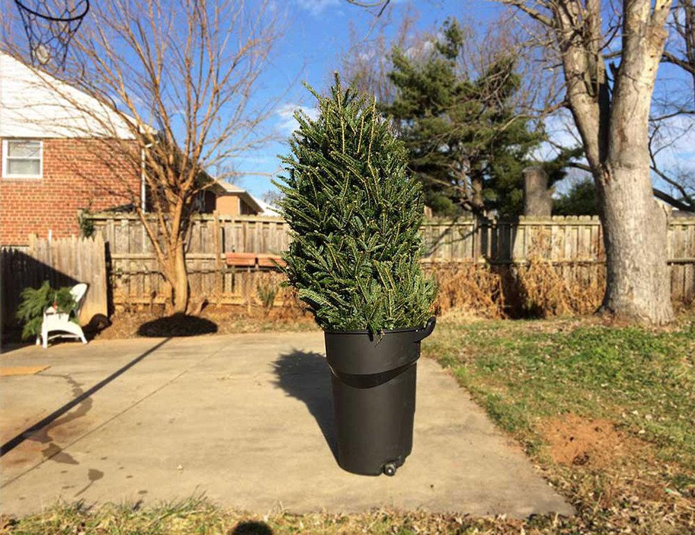 121200?-Christmas-tree-web.jpg