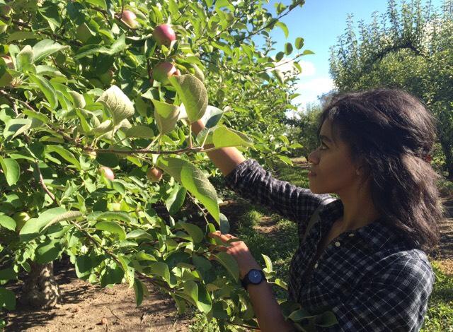 Community Member Spotlight: Amanda McLemore of Baguette & Butter | Zero Waste Chicago