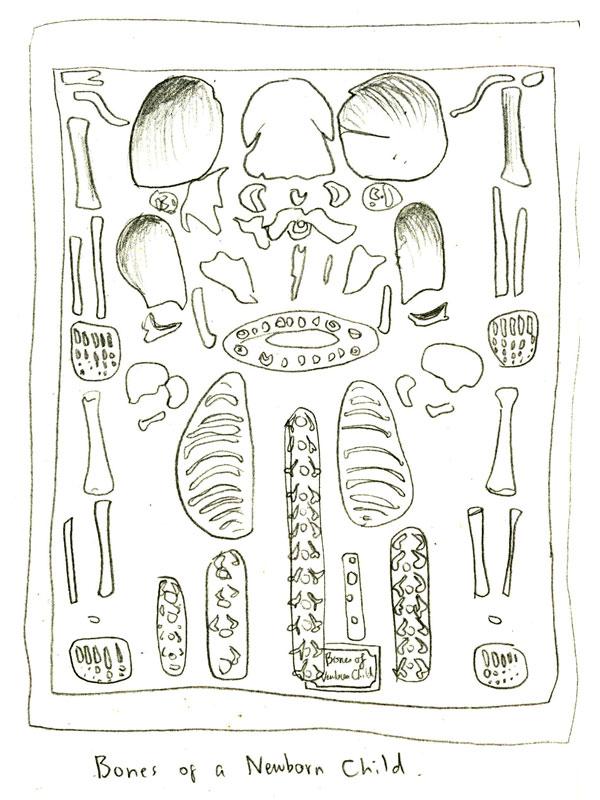 Old Fashioned Anatomy Museum Edinburgh Gift Anatomy And Physiology