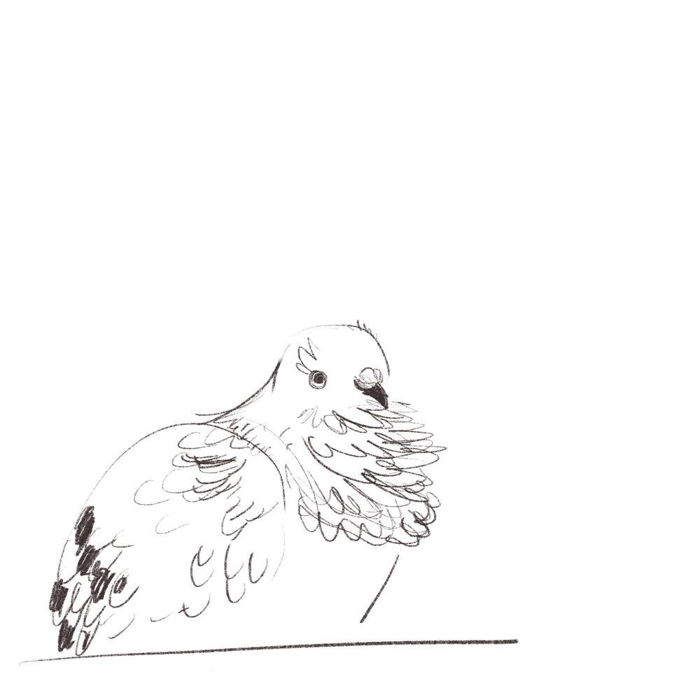 pigeon-pencil.jpg