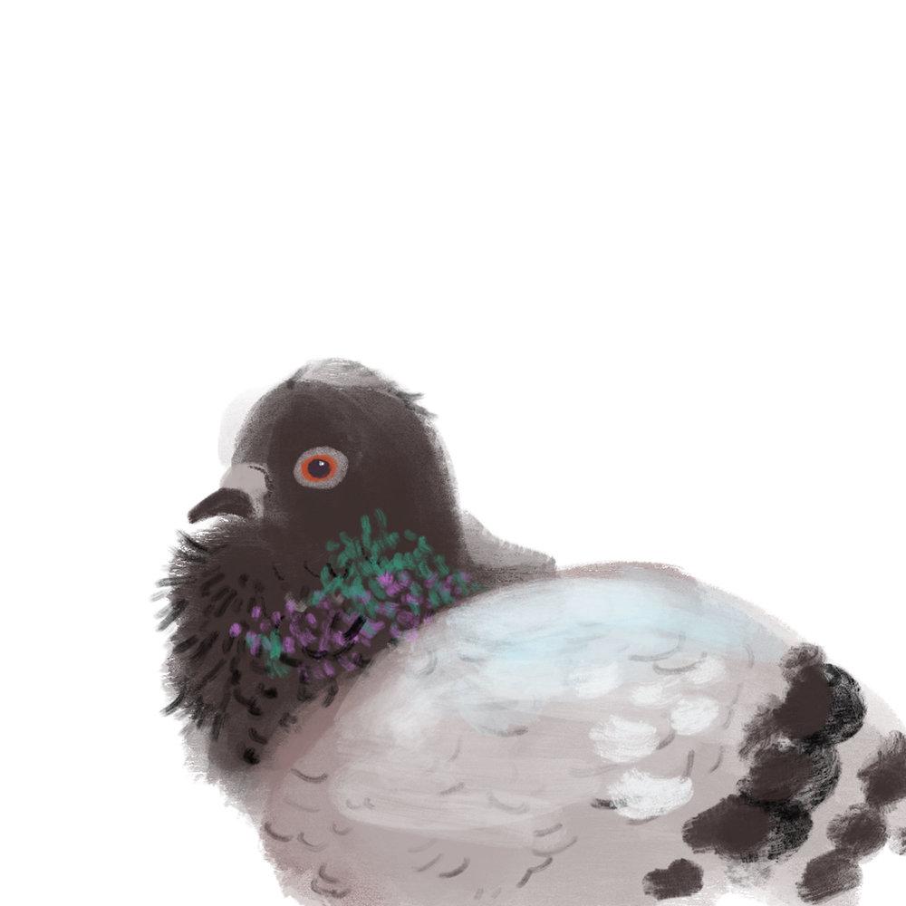 pigeon-painty.jpg