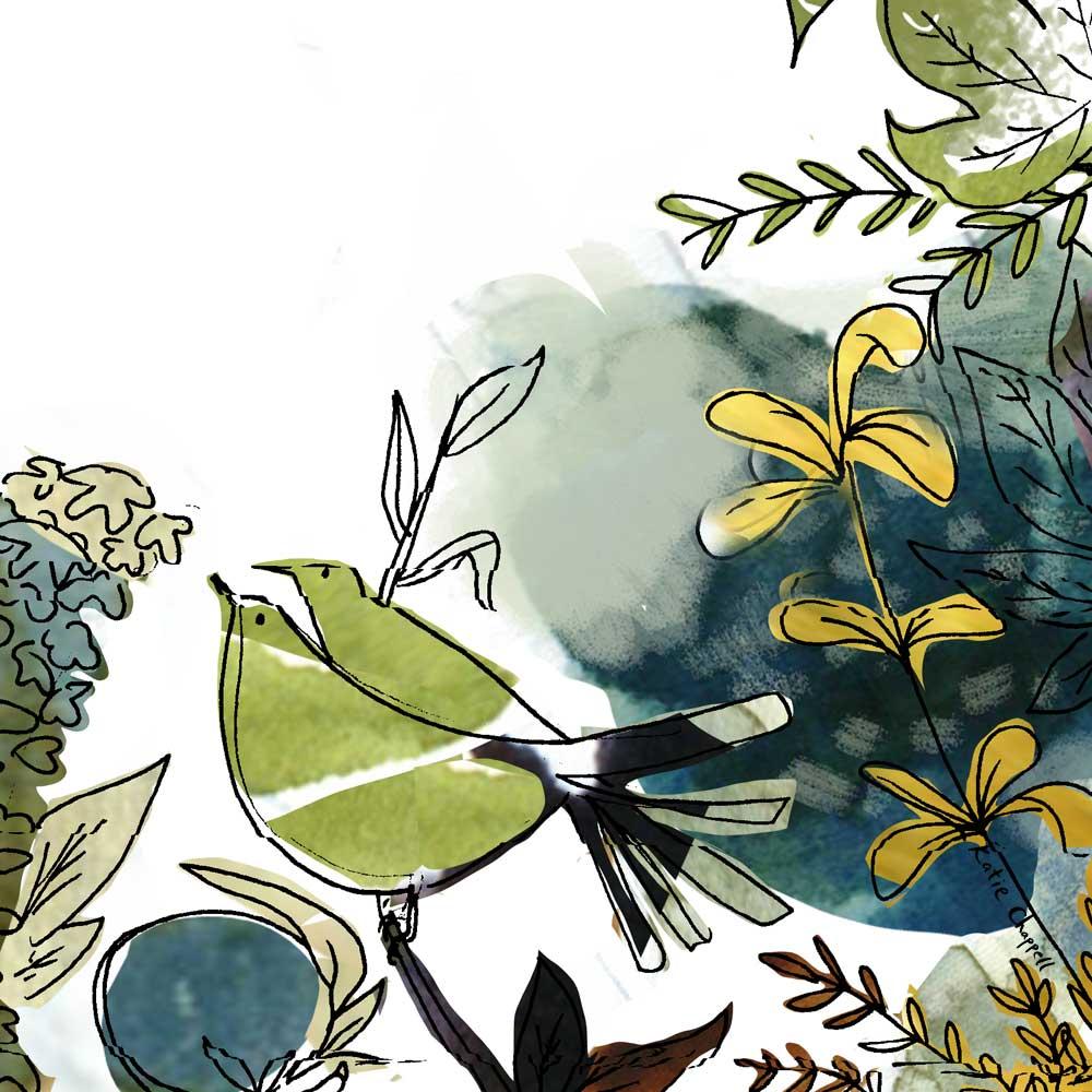 more-birds katie chappell illustration.jpg