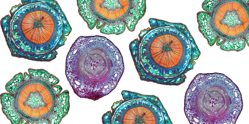 Histology_cover1.jpg