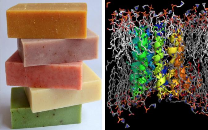 Lipids Soap Making.jpg