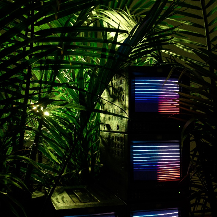 Luc Bokor-Smith,   node-558,  2018 .  CRT television monitors, palm trees, and live electronics. Dimensions: 14 x 4 feet. Courtesy of the artist