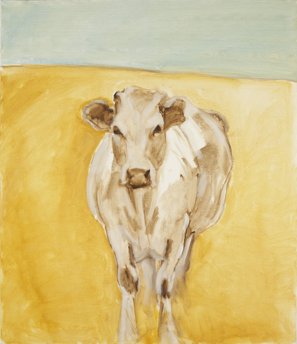 Cow 2004