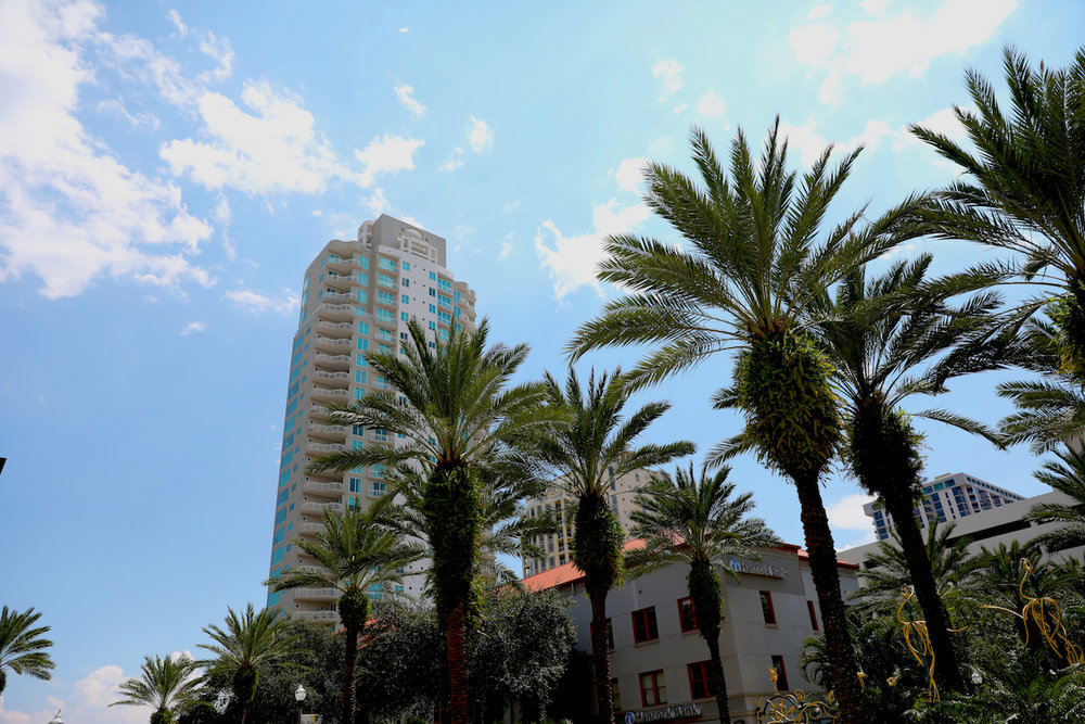 Palm trees sprout up near The Sundial in Downtown St. Pete. Heather Comparetto/The Penny Hoarder