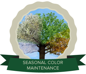 SeasonalColor2.png