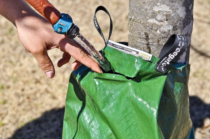 #3 Then, fill it full with water.  The TreeGator® releases 20 gallons over 5-9 hours to the tree, giving it a deep saturation.