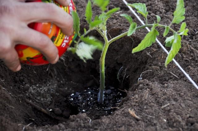 Planting-Tomatoe-04-05-11-91Raw-640x425.jpg