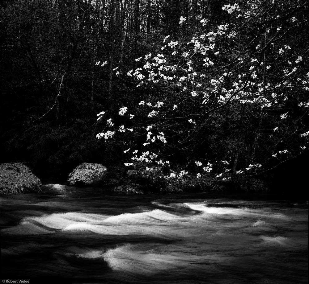 Flowering Dogwood Flowing Water.jpg