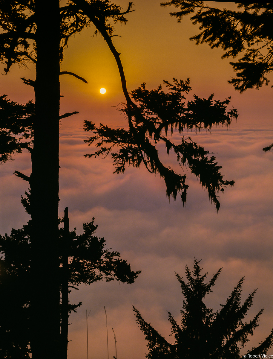 Redwood Silhouette, Sunset Above the Clouds