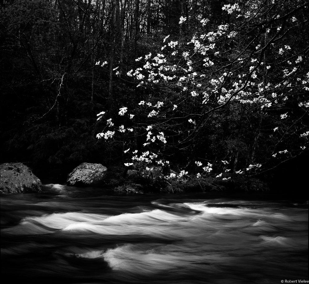 Flowering dogwood flowing water jpg