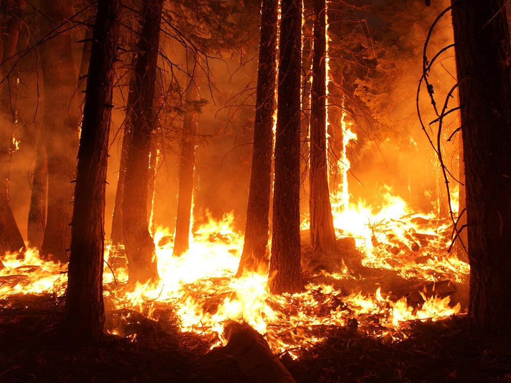 WILDFIRE RESPONSE COMPLICATED BY WILDCAT FIREFIGHTERS - CPF WORKS TO RESTRICT PRIVATE CREWS MASQUERADING AS FIRST RESPONDERS