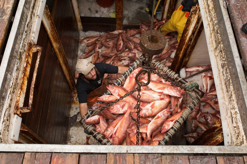 F/V Pioneer unloading rockfish in Monterey. (Photo Credit: Corey Arnold)