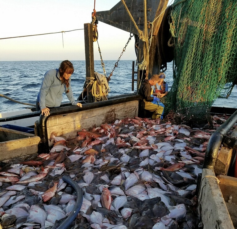 Observer viewing groundfish haul on the F/V Pioneer. Photo by Giuseppe Pennisi