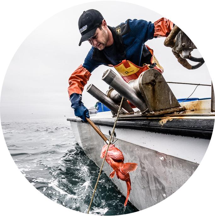 seaharvest_blackcod_circle.jpg