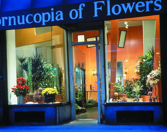 Cornucopia Flowers -