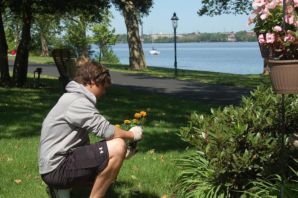 Volunteer planting flowers