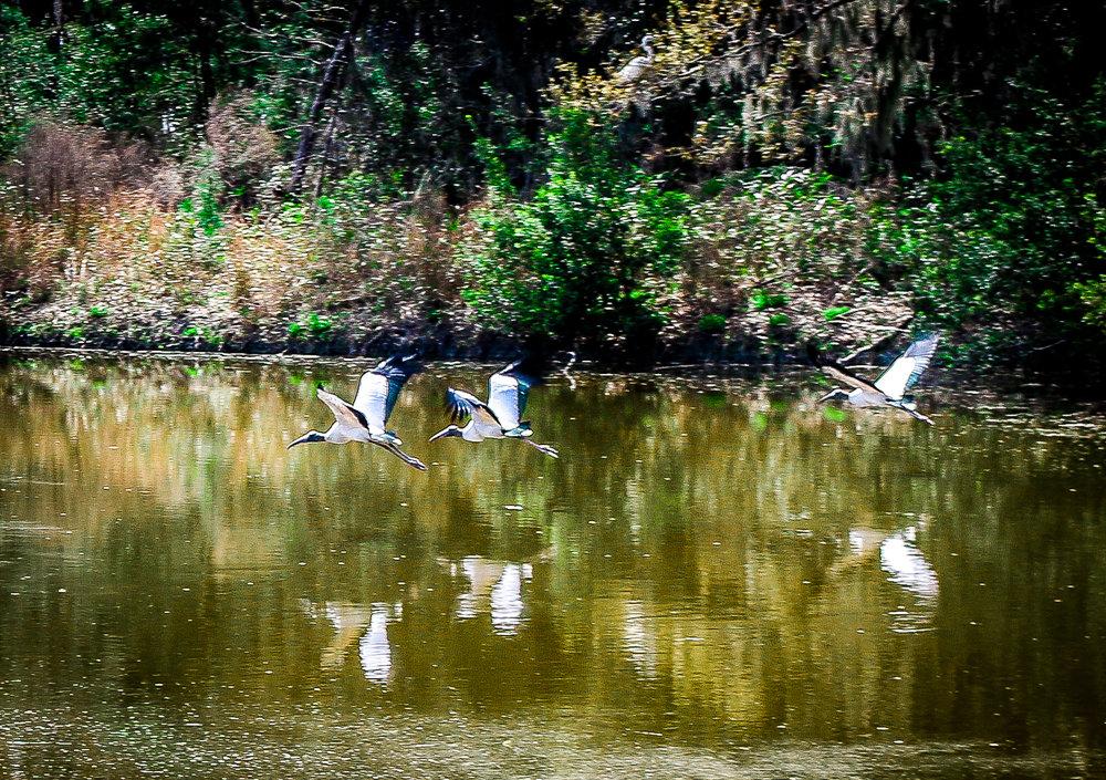 Birds Flying Near Melrose