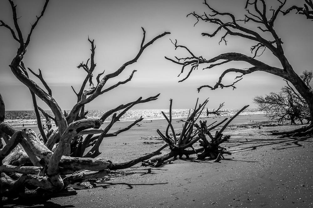 Wild Beach at Botany Bay