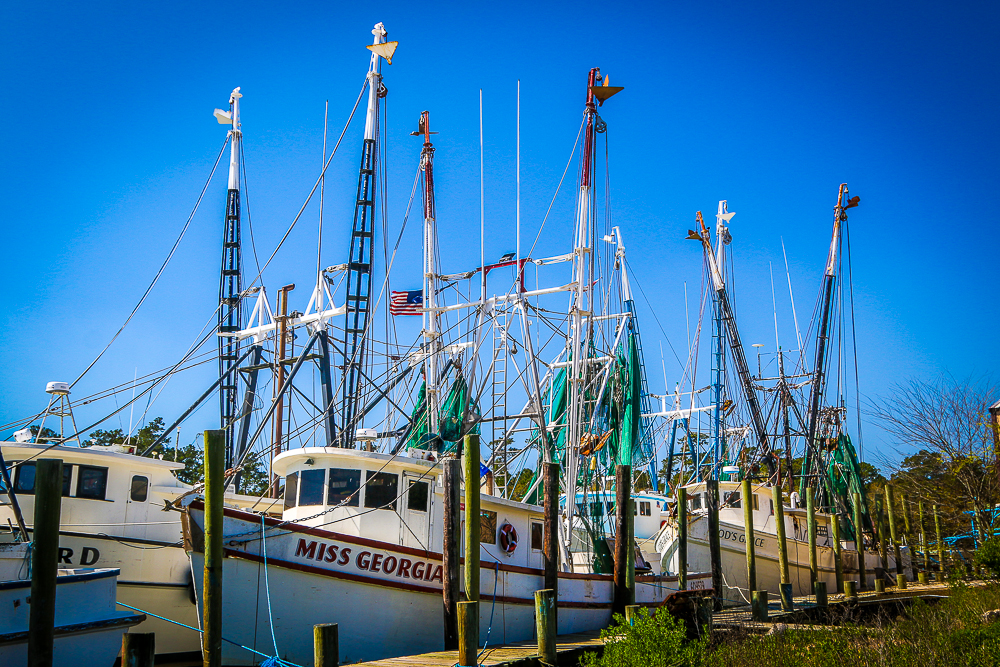 Shrimp Fleet at McClellanville