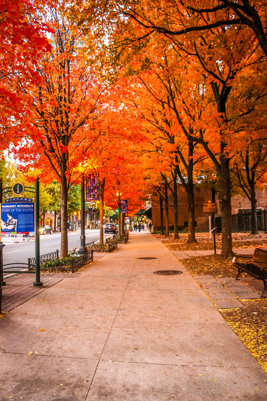 Atlanta's Fall Colors
