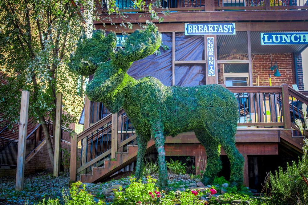Ivy Moose in Blue Ridge
