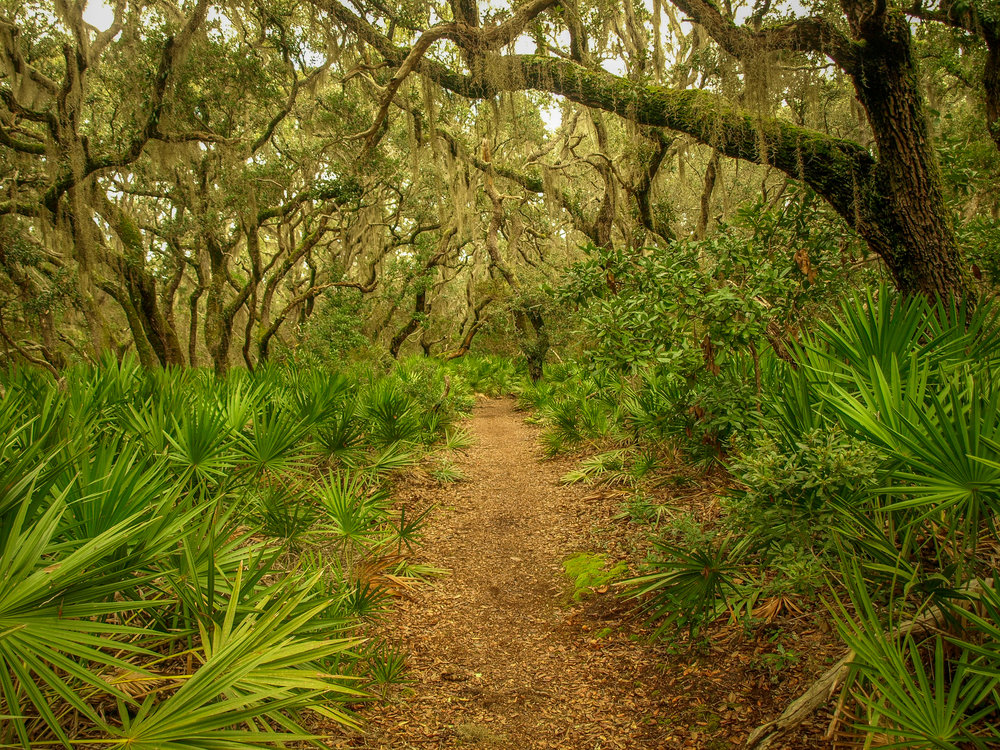Cumberland Island National Seashore Georgia GA