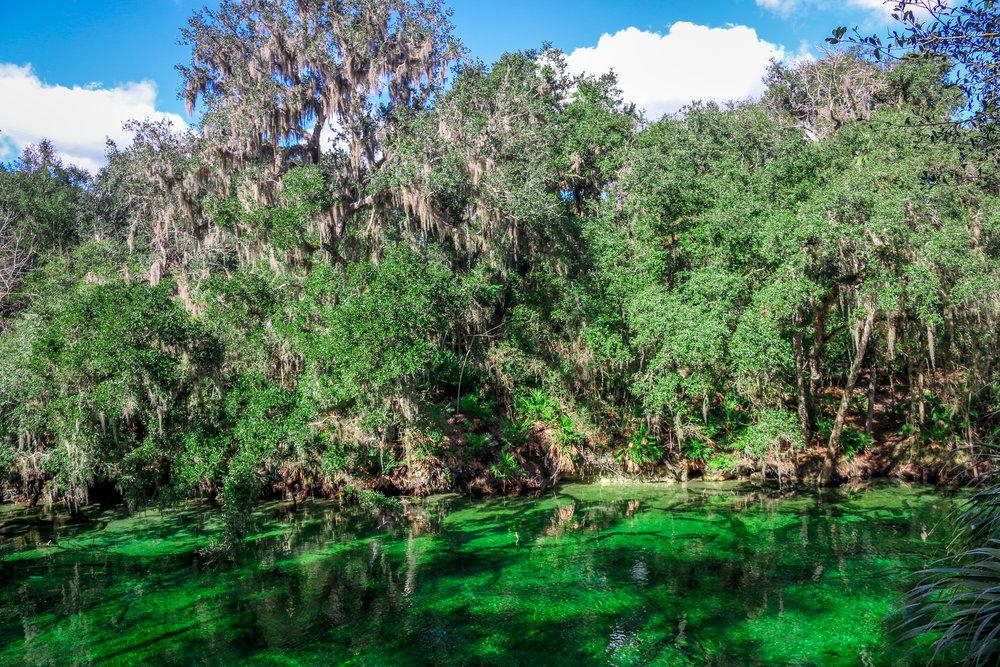 Blue Springs State Park Orange City Florida FL