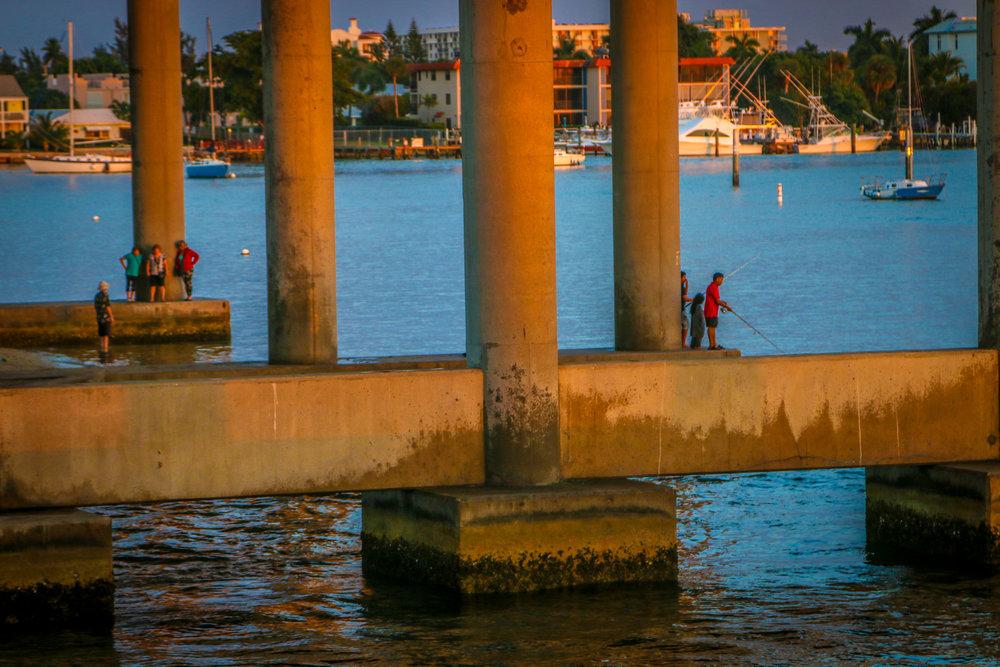 phil Foster park blue heron bridge