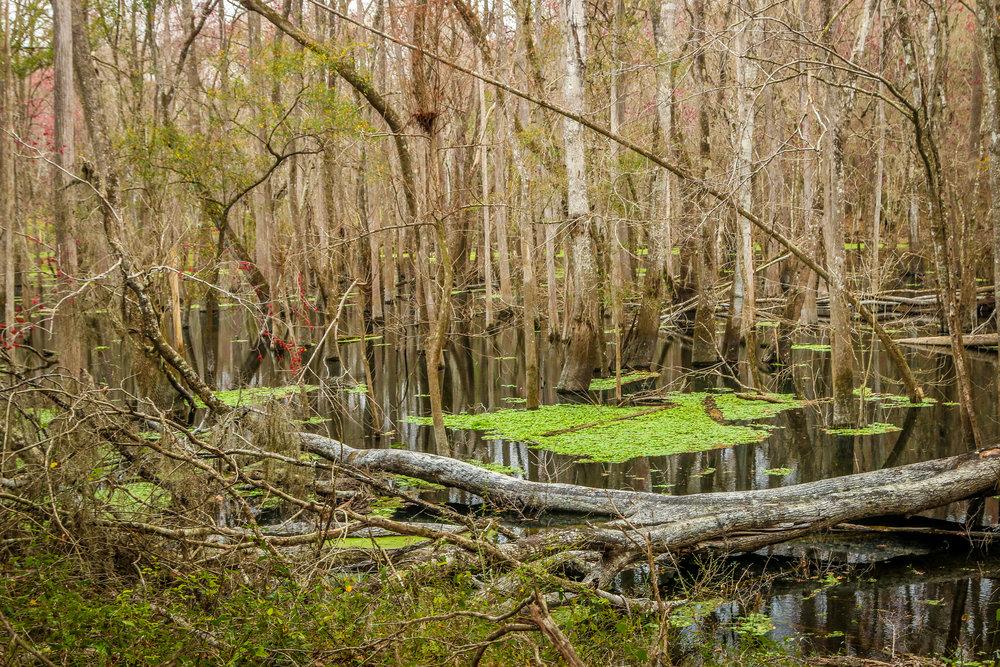 ichetucknee springs state park florida fl