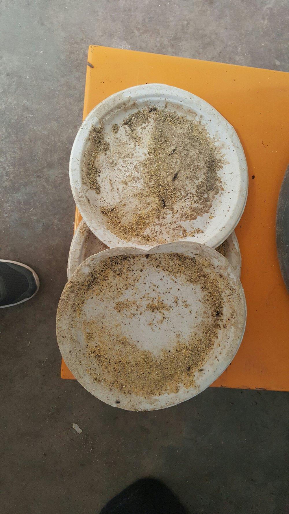 Soiled Paper Plates.jpg