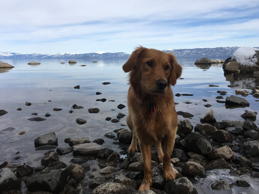 Here's a shot of my dog, Holly, in South Lake Tahoe.