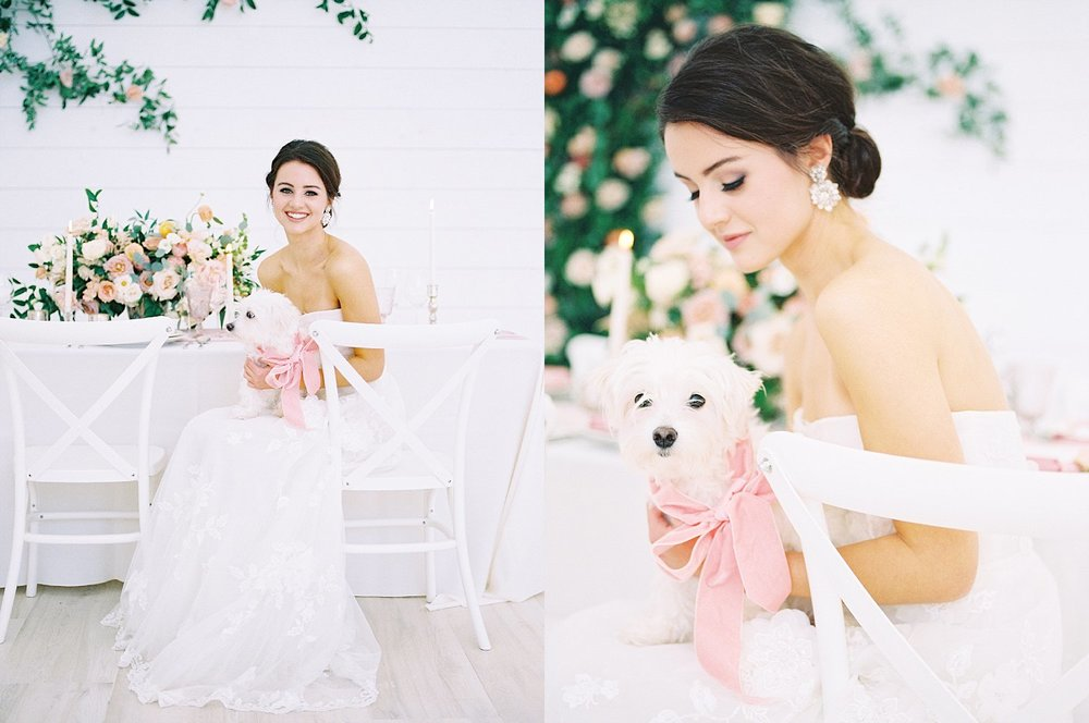 Bride holding a white dog with a pink ribbon