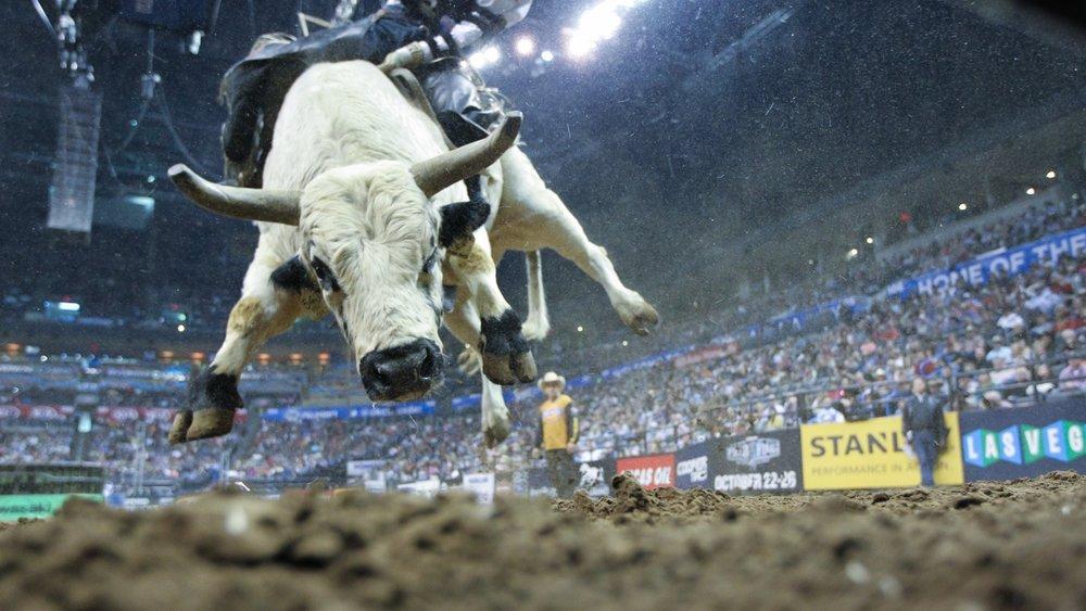 PBR Finals Bucking Bull