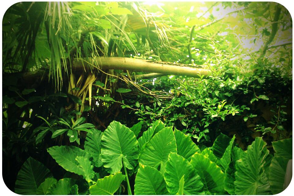 junglemermaid.jpg