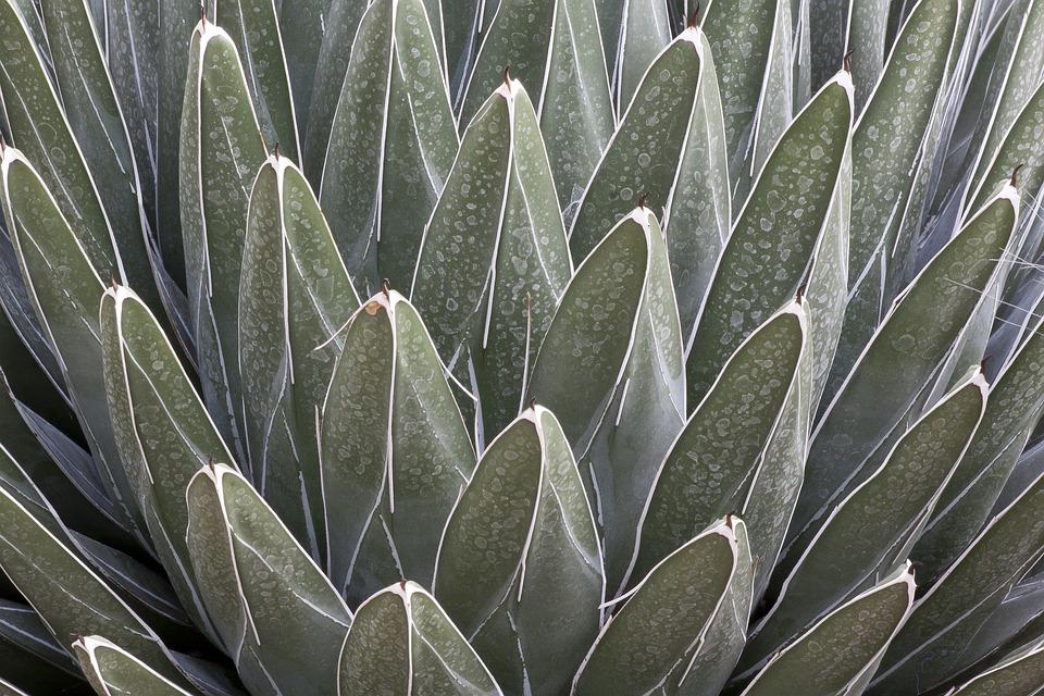 cactus-1304455_960_720.jpg