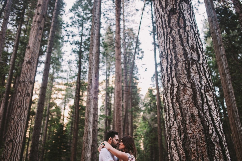 Engagement Shoot in Yosemite Ponderosa Pine Woodland